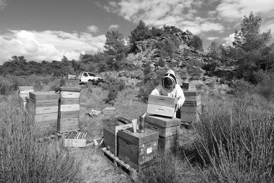 Hive inspection on landscape of scrub land